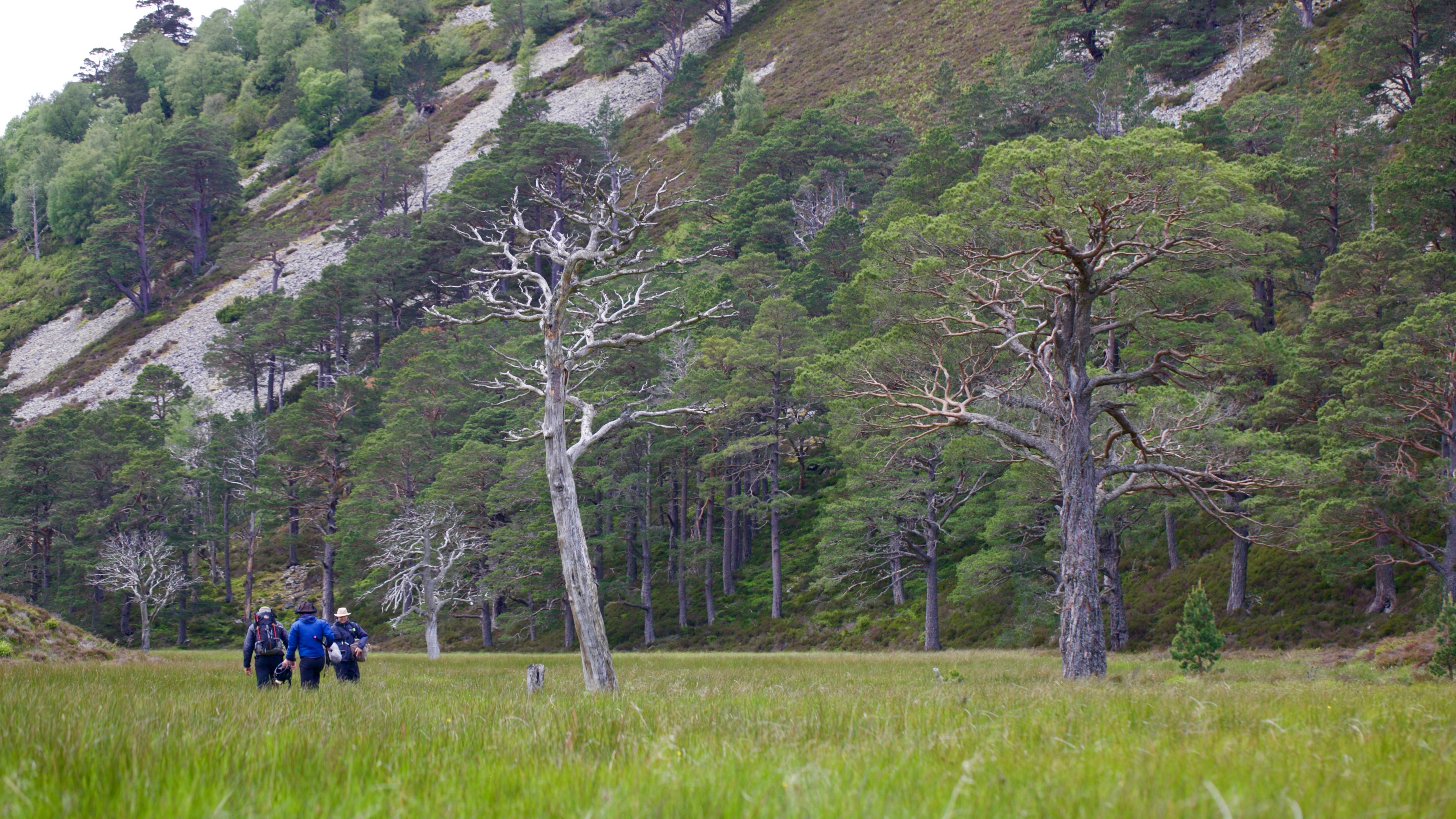 Scottish Highland Forest - filming for Akura Timepieces